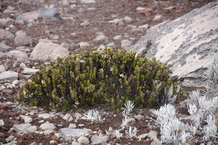 08_vegetation