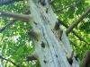 07_kletterbaum