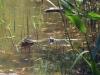 11_turtle