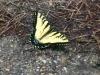 13_butterfly