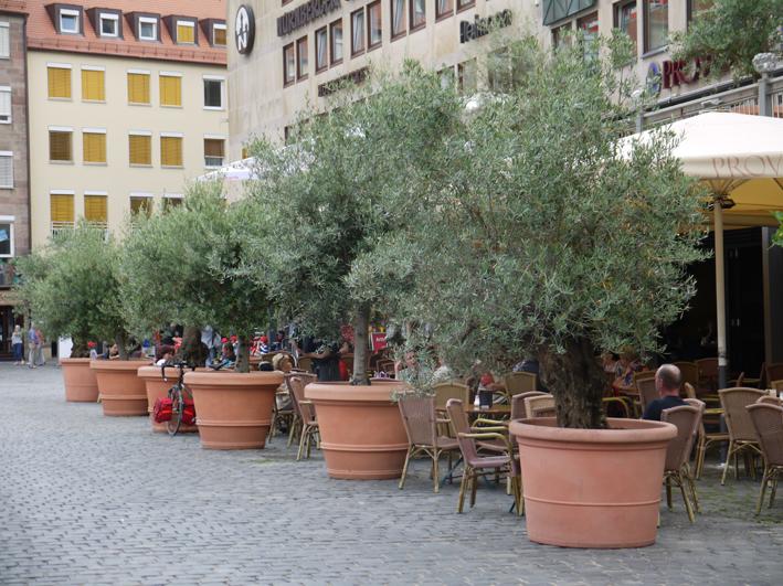cafe_hinter_olivenbaeumen