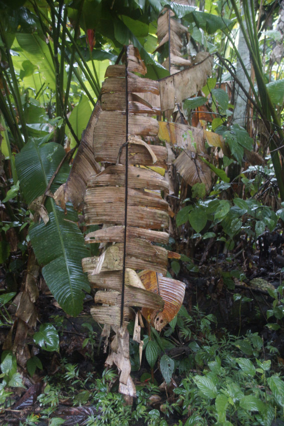 21_bananenblatt