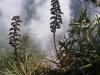 21_vegetation