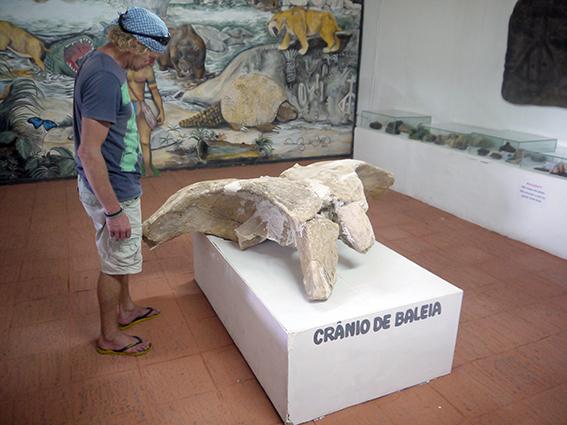 granio_de_baleia