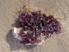 18_koralle