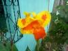 10_flores-blume