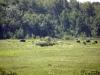 08_erste_herde_bisons
