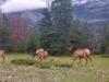 44_deer