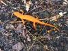 15_orange