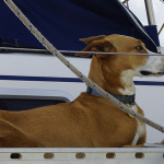 Balú an Bord